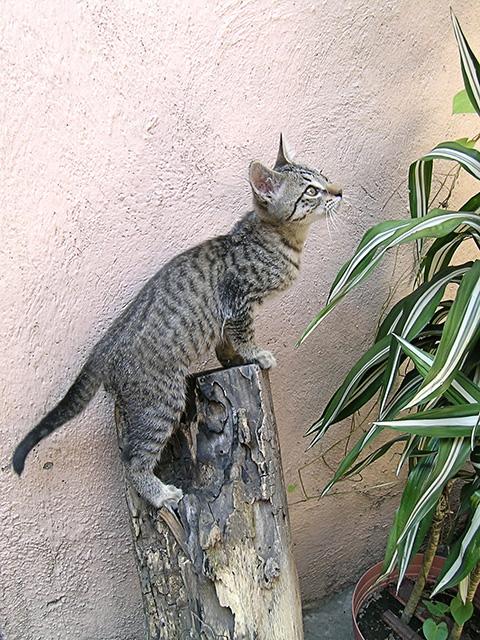 El animal mas fotografiado es… un lindo gatito