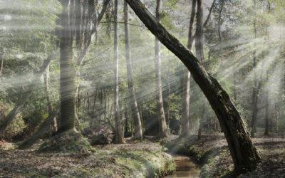 Calidad de la luz; breve introducción
