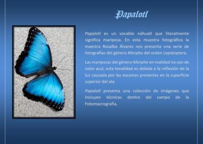 Papalotl